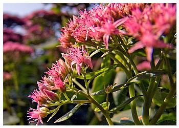 рецепт с пчел от простатита